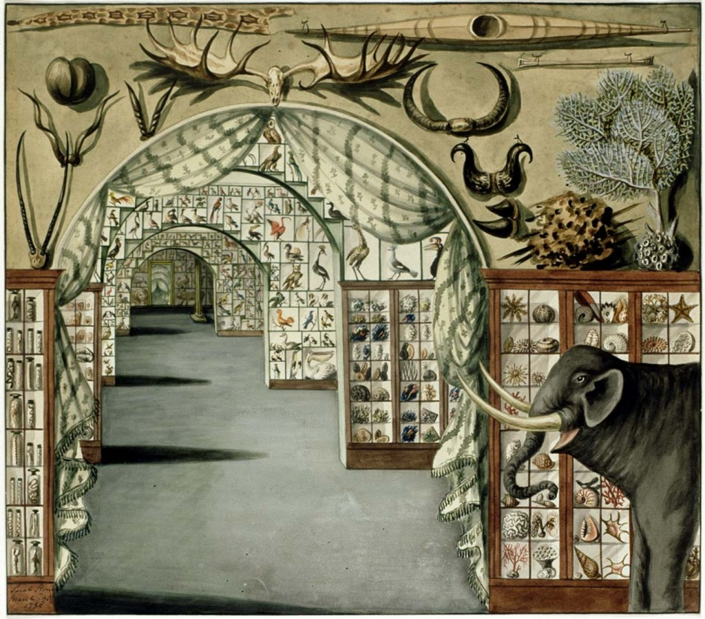 Figure 1. Watercolour of interior view of Sir Ashton Levers Museum, London. Painting by Sarah Stone, 1785. Wikimedia Commons / State Library of New South Wales.