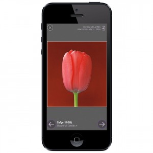 4_getty_mapplethorpe_LA_slideshow_mobile